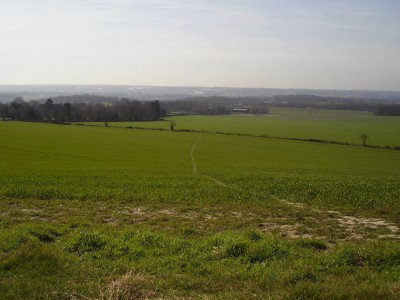 Thurnham dog-friendly inn with dog walks, Kent - Driving with Dogs