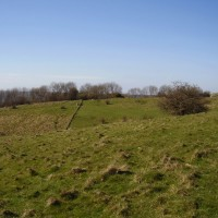 Broad Downs dog walk near Wye, Kent - Dog walks in Kent