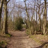 M25 Junction 3 dog walk and dog-friendly pub, Kent