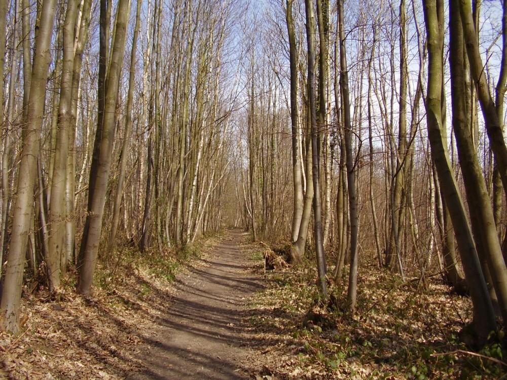 M25 Junction 3 dog walk and dog-friendly pub, Kent - Dog walks in Kent
