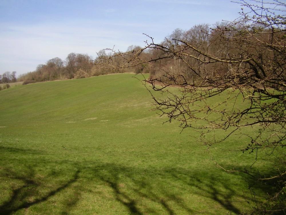 M25 Junction 6 woodland dog walk, Surrey - Dog walks in Surrey