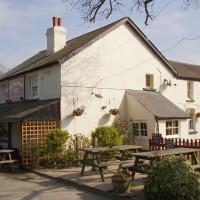 M25 Junction 8 dog walk and dog-friendly pub, Surrey - Dog walks in Surrey