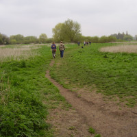 M11 Junction 12 dog walk and dog-friendly pub, Cambridgeshire - Dog walks in Cambridgeshire
