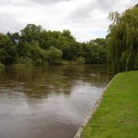 Runnymede local dog walk, Surrey - Dog walks in Surrey