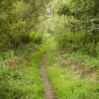M25 Junction 17 dog walk, Hertfordshire - Dog walks in Hertfordshire