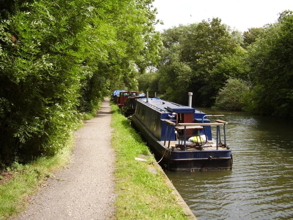M25 Junction 17 dog walk, Hertfordshire - Dog walks in Hertfordshire