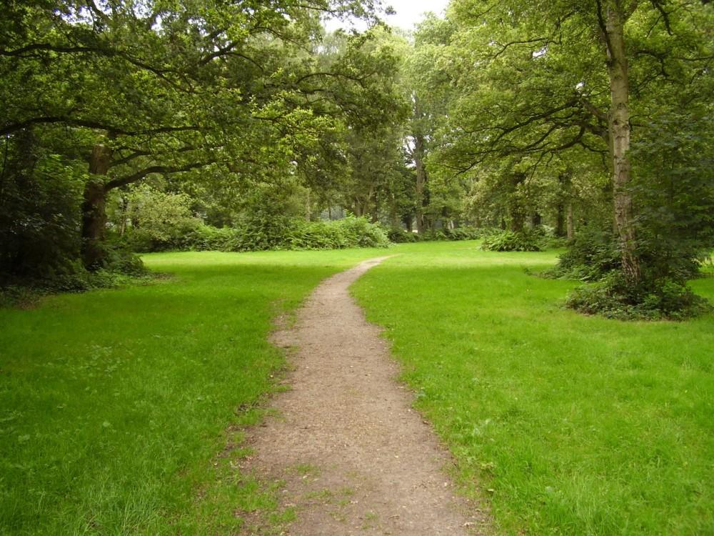 M25 Junction 18 dog walk and dog-friendly pub near Chorleywood, Hertfordshire - Dog walks in Hertfordshire