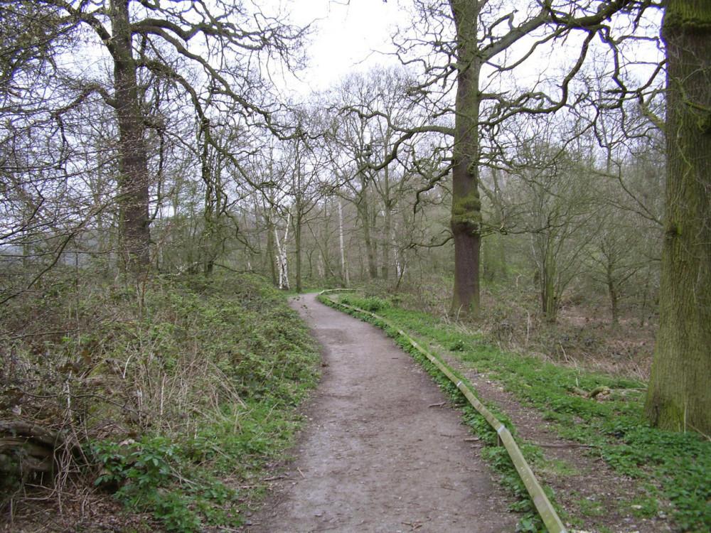 M25 Junction 24 dog walk at Trent country park, Hertfordshire - Dog walks in Hertfordshire