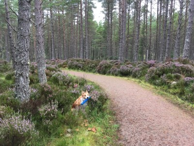 A short walk just off the A9 between Dornoch and Golspie, Scotland - Driving with Dogs