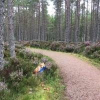 A short walk just off the A9 between Dornoch and Golspie, Scotland - IMG_3775.jpg