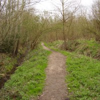M25 Junction 31 dog walk near South Ockendon, Essex - Dog walks in Essex
