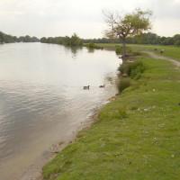 M40 Junction 4 dog walk and dog-friendly pub, Buckinghamshire