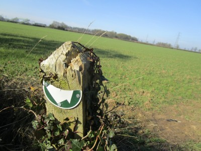 Dog-friendly pub and dog walk near Rugby, Warwickshire - Driving with Dogs