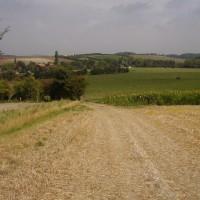 M40 Junction 6 dog-friendly pub and dog walk, Oxfordshire - Dog walks in Oxfordshire