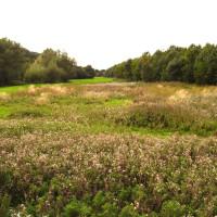 M40 Junction Cherwell Valley Services dog walk, Oxfordshire