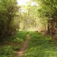 M40 Junction Cherwell Valley Services dog walk, Oxfordshire - Dog walks in Oxfordshire