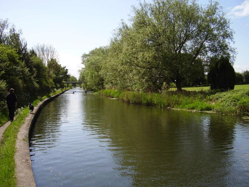 M42 Junction 5 dog walk, West Midlands - Dog walks in the West Midlands