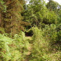 Remote forest dog walk, Herefordshire - Dog walks in Herefordshire