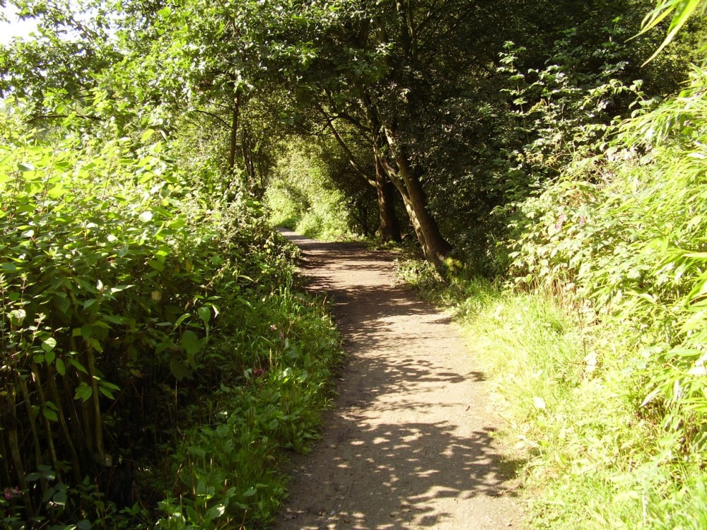 M56 Junction 5 dog walk and industrial heritage, Cheshire - Dog walks in Cheshire