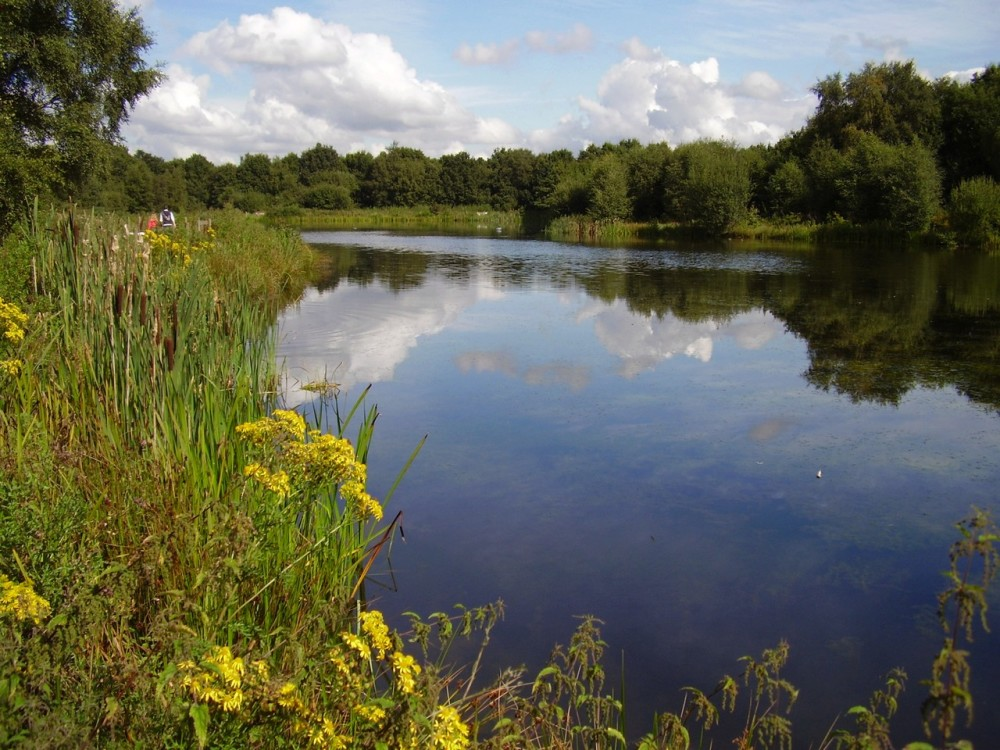 Wilmslow dog walk, Cheshire - Dog walks in Cheshire