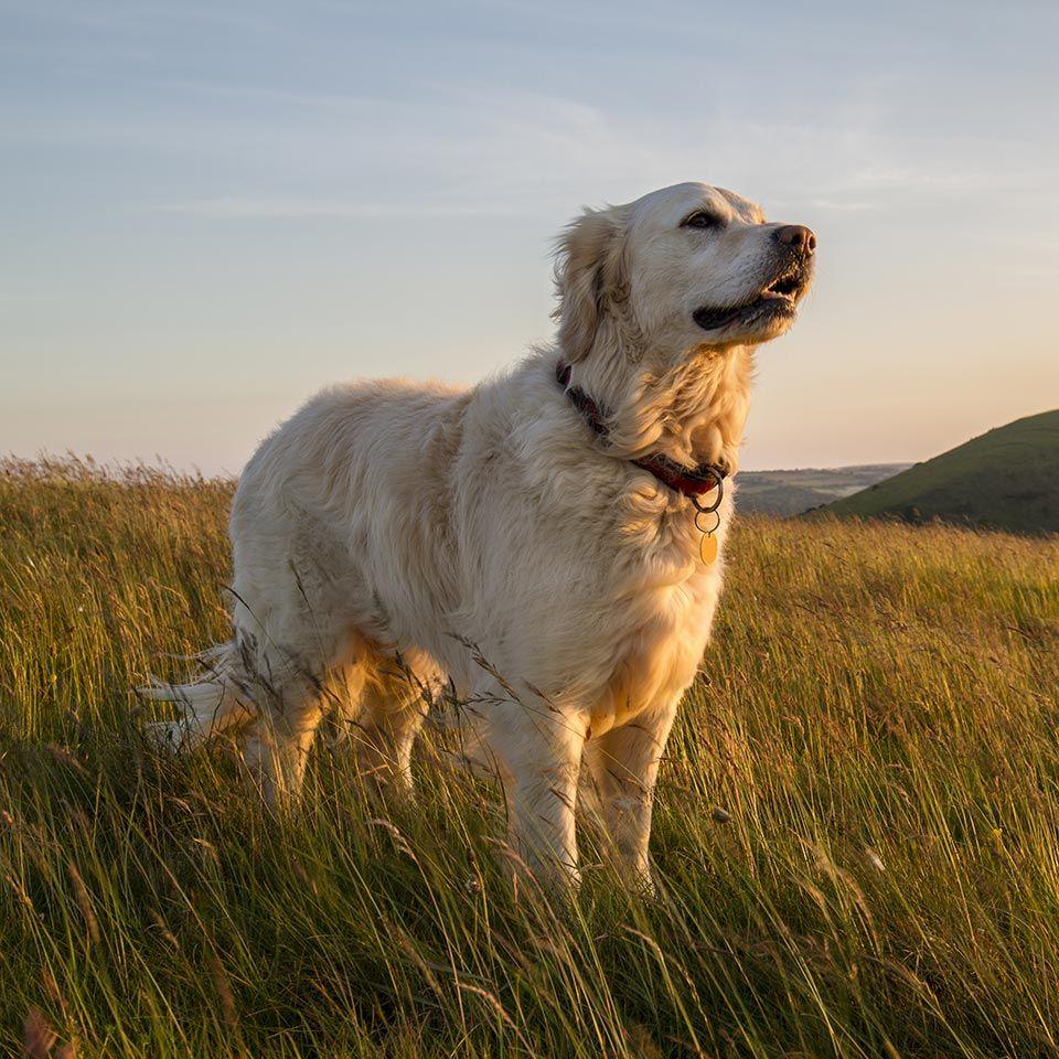 canine holistic health.jpeg