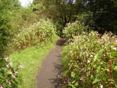 Alkrington Woods dog walk, Greater Manchester - Driving with Dogs