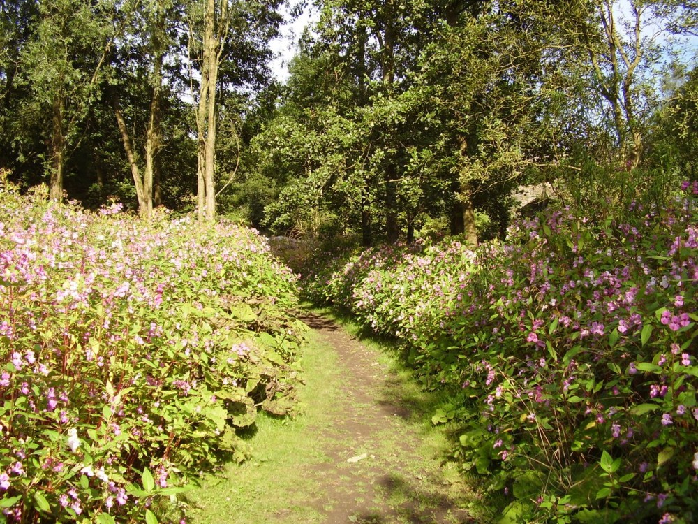 M60 Junction 22 or 23 dog walk, Lancashire - Dog walks in Lancashire