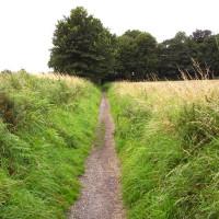 M62 Junction 7 dog walk near Widnes, Cheshire - Dog walks in Cheshire