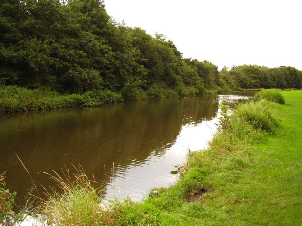 M62 Junction 9 dog walk, Cheshire - Dog walks in Cheshire