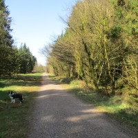 Woodland dog walks with one accessible route, Somerset - Dog walks in Somerset.JPG