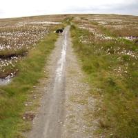 M62 Junction 22 dog walk Saddleworth Moor, Lancashire - Dog walks in Lancashire