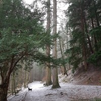 The Hermitage woodland walk, Scotland - 20190201_142228.jpg