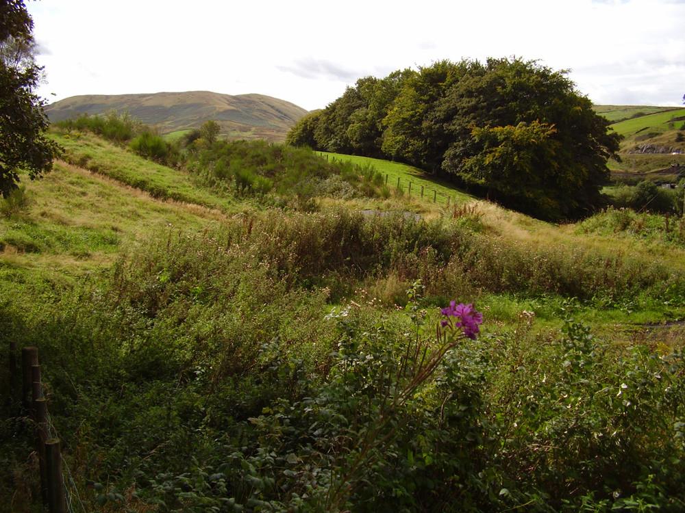 M6 Junction 38 dog-friendly pub and walk near Tebay, Cumbria - Dog walks in Cumbria