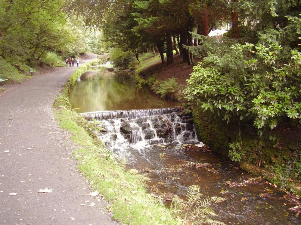 M65 Junction 4 Sunnyhurst Wood dog walk, Lancashire - Dog walks in Lancashire