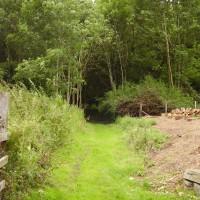 M74 junction 8 dog walk and a garden centre, Scotland - Dog walks in Scotland