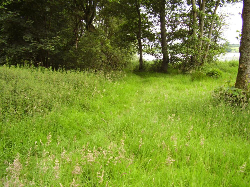 M74 Junction 18 dog walk with ruined castle, Scotland - Dog walks in Scotland