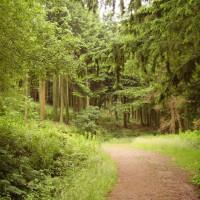 M74 Junction 19 woodland dog walk near Ecclefechan, Scotland