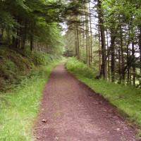 M74 Junction 19 woodland dog walk near Ecclefechan, Scotland - Dog walks in Scotland