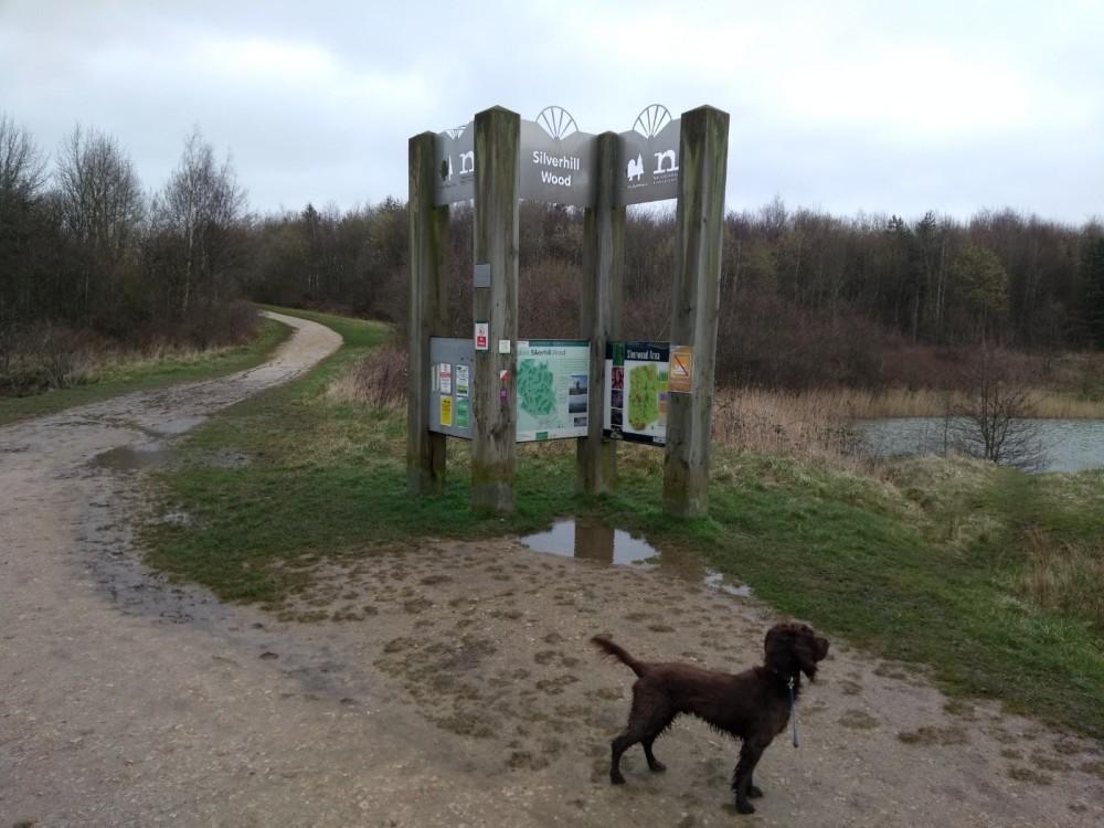 Silverhill Wood dog walks, Nottinghamshire - 2019-03-16 10.24.54.jpg