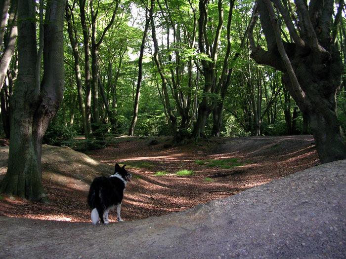 Epping Forest dog walk and dog-friendly pub, Essex - Dog walk through history near Loughton.jpg