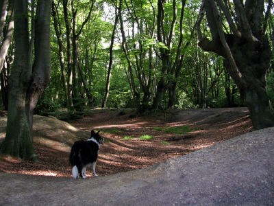 Epping Forest dog walk and dog-friendly pub, Essex - Driving with Dogs