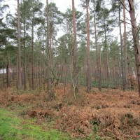 Woodland dog walk near Farnham, Surrey - Surrey dog walks.JPG
