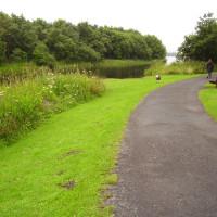 M90 Junction 4 dog walk near Cowdenbeath, Scotland - Dog walks in Scotland