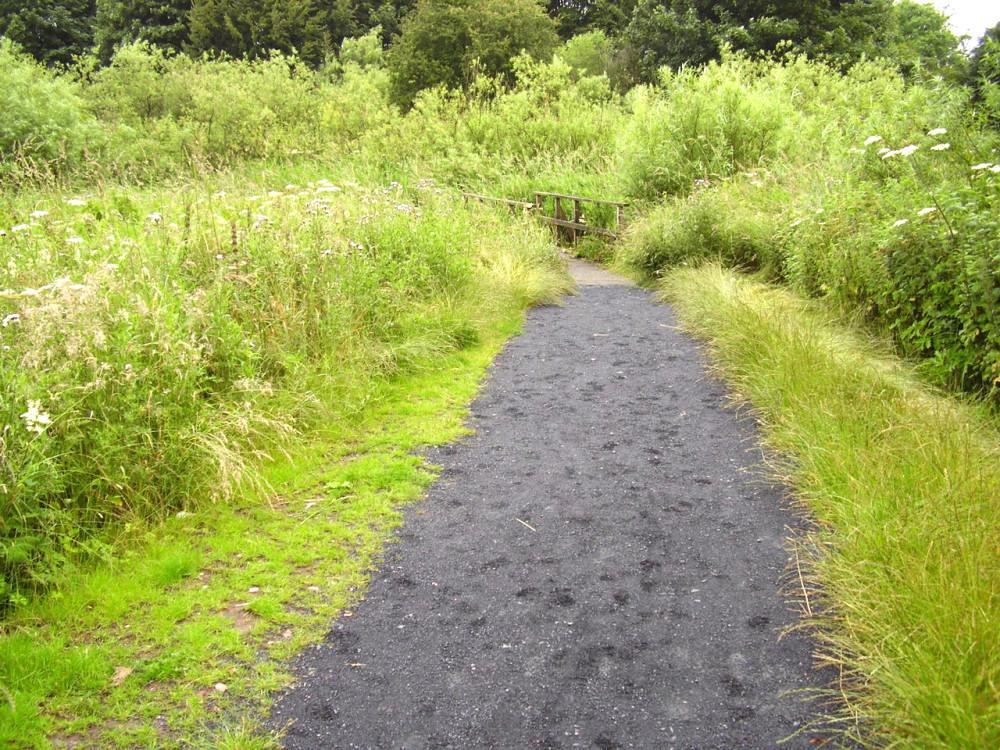 M90 Junction 6 dog walk near Kinross, Scotland - Dog walks in Scotland