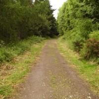 M90 Junction 10 dog walk near Perth, Scotland - Dog walks in Scotland