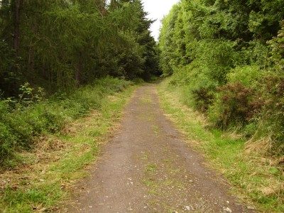 M90 Junction 10 dog walk near Perth, Scotland - Driving with Dogs