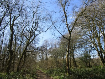 A25 woodland dog walk near Guildford, Surrey - Driving with Dogs