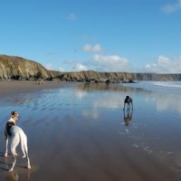 Marloes Sands dog-friendly beach, Wales - Wales dog-friendly beach and dog walk