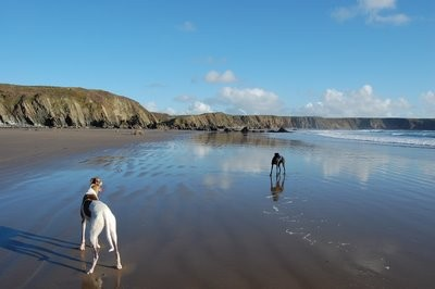 Marloes Sands dog-friendly beach, Wales - Driving with Dogs