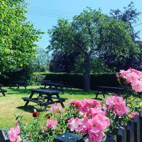 A12 dog-friendly historic inn, Suffolk - Suffolk dog-friendly pub and dog walk